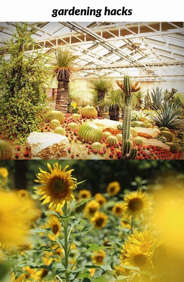 ee8530c47b665e005c9f5a339729e5bd - How To Be A Gardener Bbc