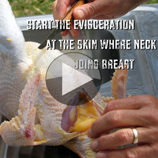 Step-by-Step Chicken Processing (Video) – Homesteading and Livestock – MOTHER EARTH NEWS *Viewer discretion advised! Video is not for everyone, although Organic chicken should be! Scratch and Peck Feeds Broiler Grower is Non-GMO Verified, Organic Certified and Soy Free!