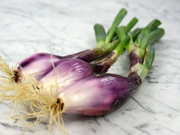 The big red Italian onion that is shaped like a bottle. They are great grilled, fresh or in hearty stews.