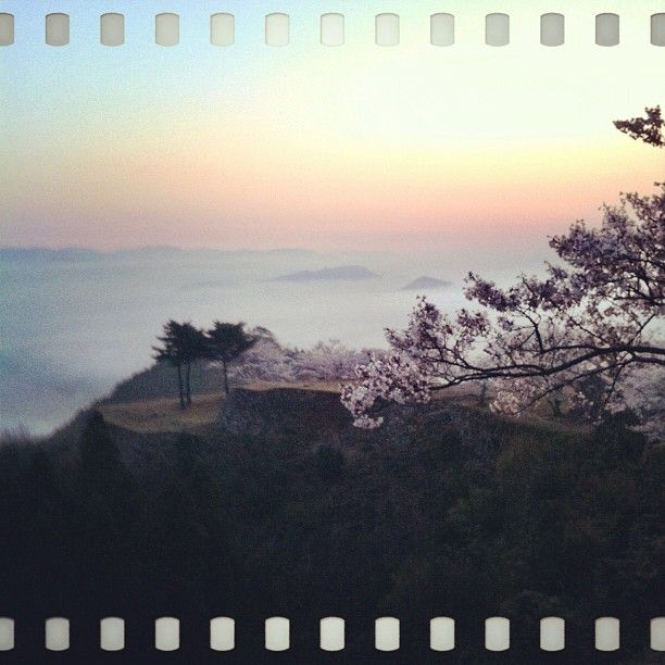 桜と雲海と竹田城