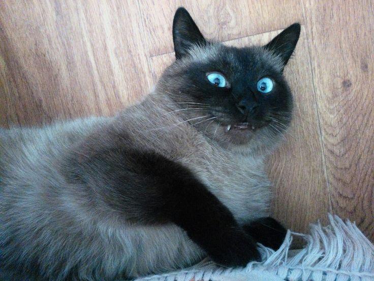 Новости (с изображениями) | Животные, Смешные фото кошек ...