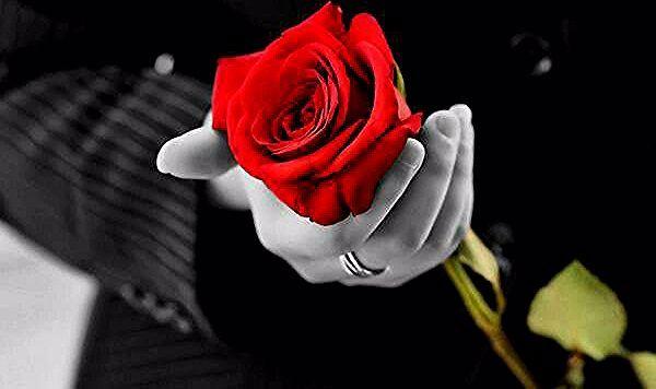 Pin On Rosa Roja