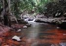 Beautiful waters of the stream - Mount Tambourine