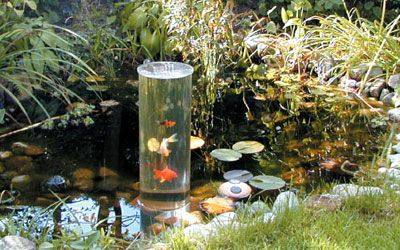 1000 images about koi pond on pinterest for Inverted fish tank