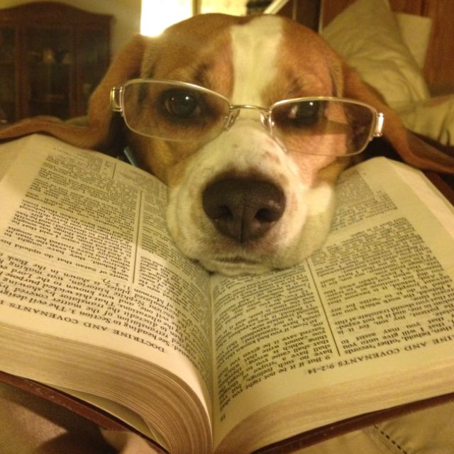Beagle: Book Worms, Reading, Favorite Things, Smarties Article, Pets, Beagles Love, Stories Time, Animal Pinterest, Dogs With Book