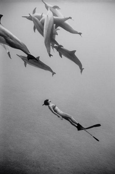 swim.