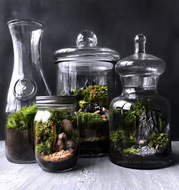 les 25 meilleures id es de la cat gorie terrarium de mousse sur pinterest jardin de mousse. Black Bedroom Furniture Sets. Home Design Ideas
