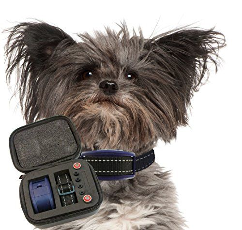 Sonic Bark Deterrents - Our K9 Royal Bark Collar Medium  Large Size Dogs Sound and Vibration Pain Free Anti Bark Collar  Case *** Click on the image for additional details. (This is an Amazon affiliate link)