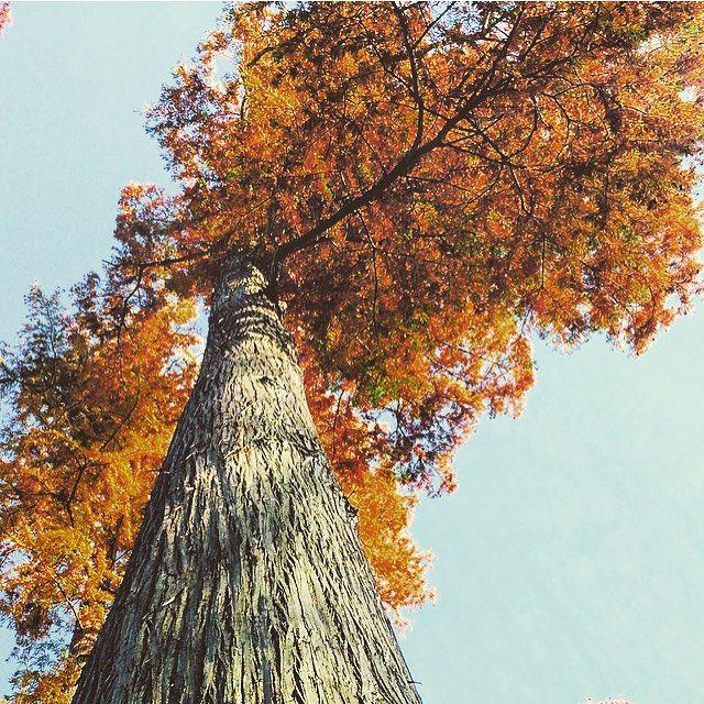 #up #lahaut #вверх #головавоблаках #vertige #nature #tree #arbre #colorful #beautiful #autumn #automne #couleursdelavie #couleursdautomne #краскиосени #осень #feuilledautomne #autumnleaves
