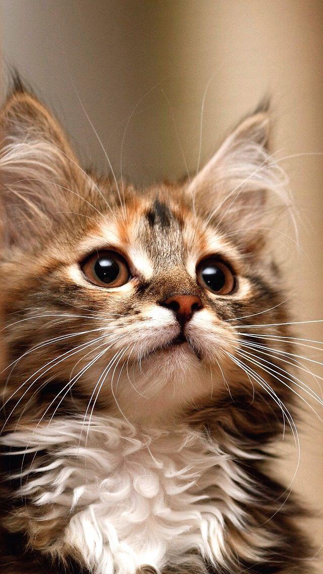 293 besten katzen bilder auf pinterest k tzchen lustige katzen und flauschige k tzchen. Black Bedroom Furniture Sets. Home Design Ideas