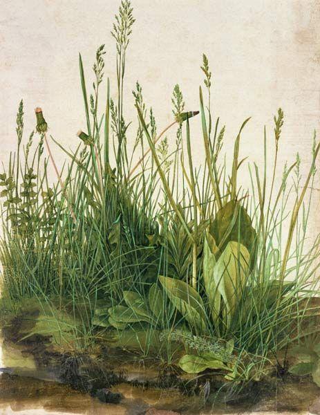 Titre de l'image : Albrecht Dürer - La grande touffe d'herbes