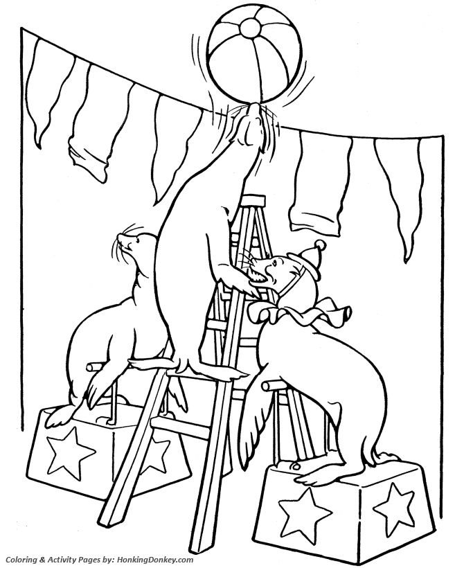 Circus Seals Coloring page Trained