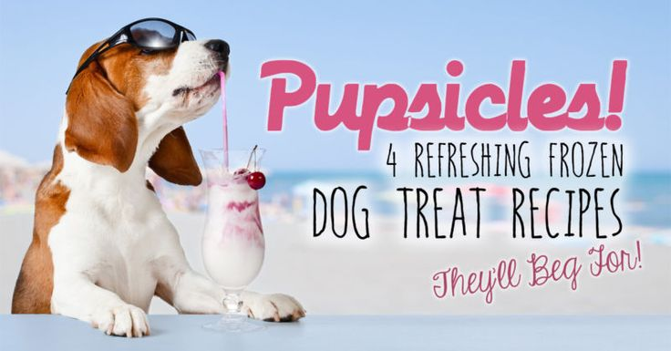 There's no better way for your dog to beat the summer heat than with a cool, refreshing treat - especially one that's been handmade with love by their very best friend… you! These four cool and refreshing...