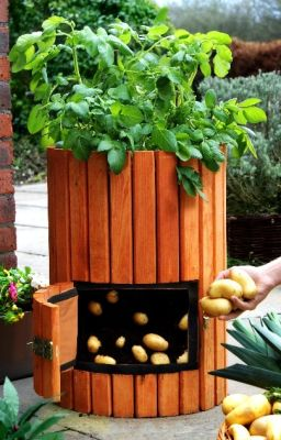 Potato Barrel http://greenupgrader.com/11708/4-simple-steps-to-grow-a-hundred-pounds-of-potatoes-in-a-barrel/