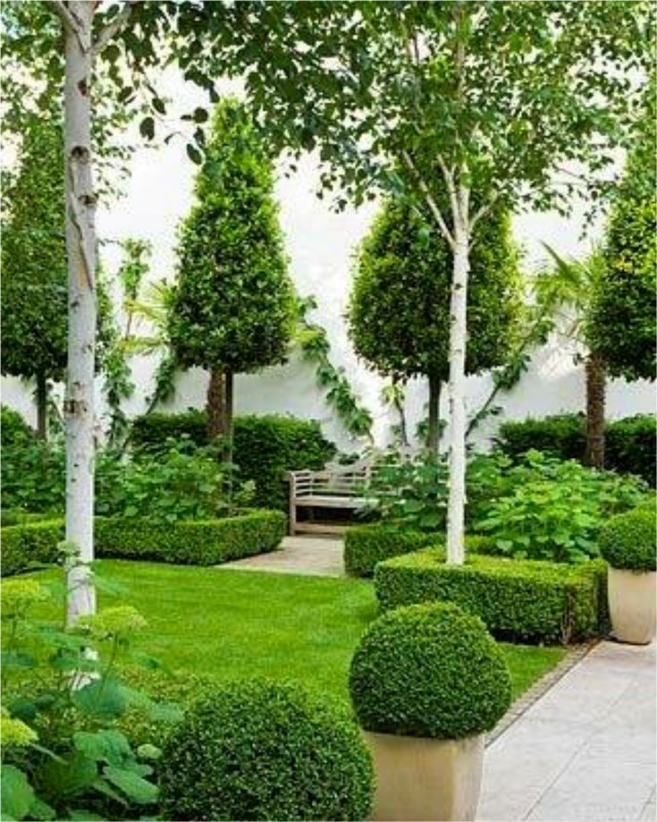 Love this look using exotic species incl silver birch for Formal landscape design