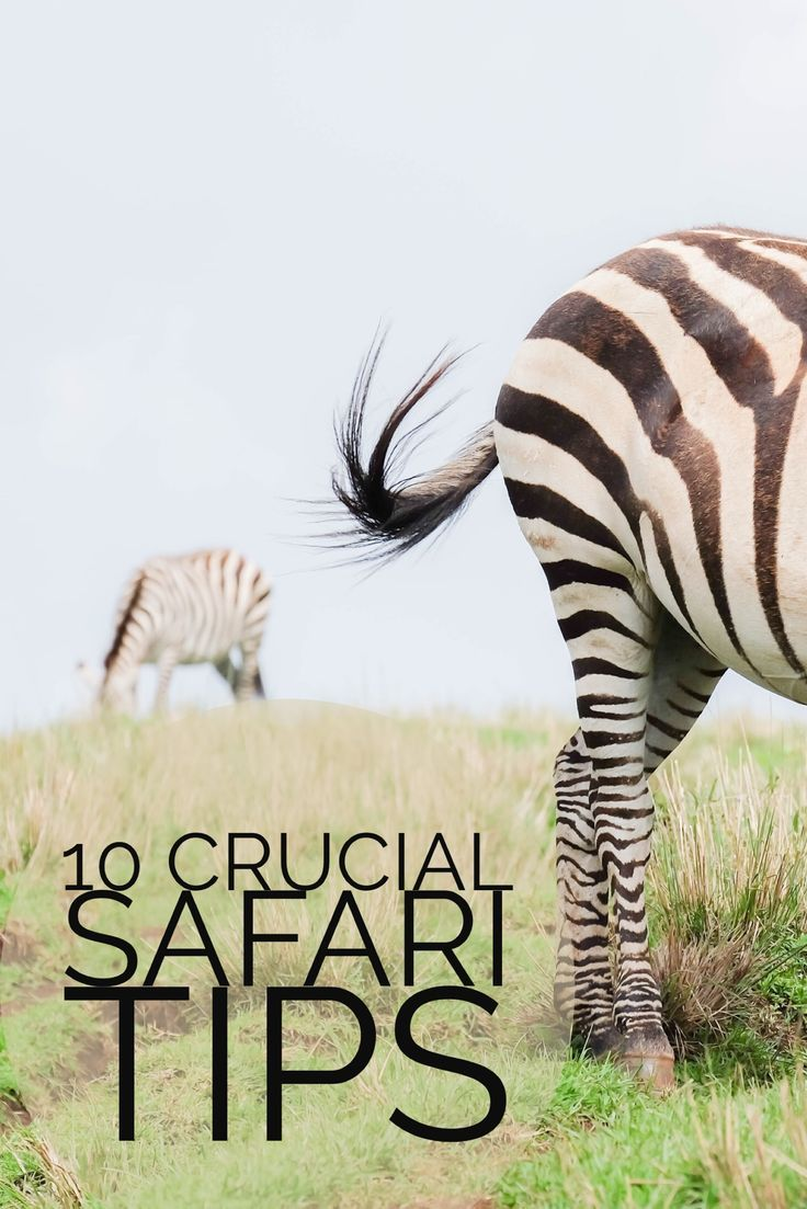 Going on your first safari? Here are ten important safari tips to remember.
