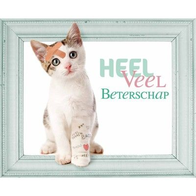 Beterschap, cat