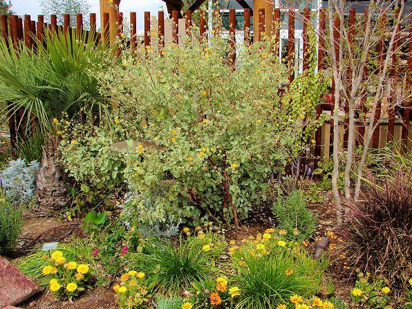 Best 25 Mallow plant ideas on Pinterest Tall purple flowers