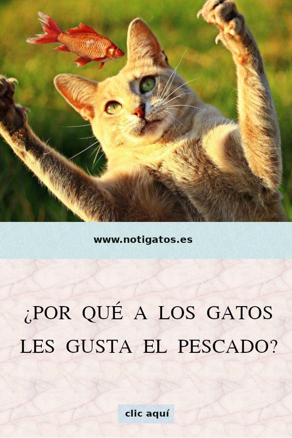 Por Qué A Los Gatos Les Gusta El Pescado Gatos Felinos Pescado