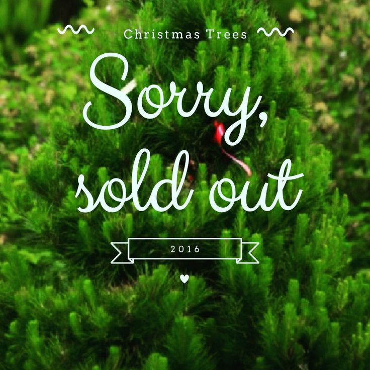 In 2015 we had huge wind storms, losing 50% of Christmas Trees over a two year age group - our first sell out was sad.