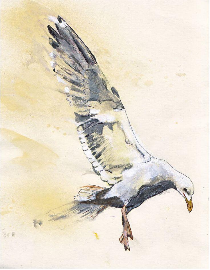 Seagull Color