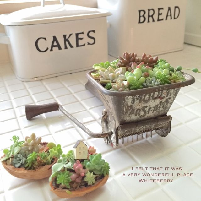 Whiteberryさんの、バス/トイレ,植物,多肉植物,ホーロー,セダム,くるカラ,ハーブカッター,GREENのある暮らし,タイル作業台,のお部屋写真