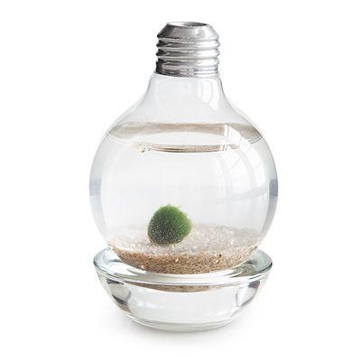 MARIMO MOSS BALL LIGHT BULB TERRARIUM | terrarium, lightbulb | UncommonGoods