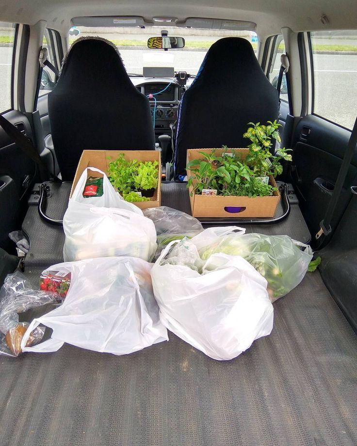 #plants #herbs #house #garden #christchurch #nz #bunnings #shopping #summer