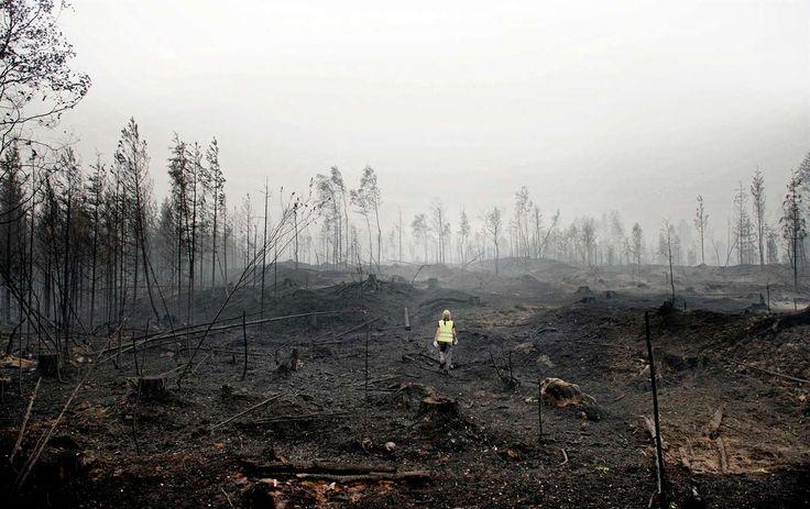 """En ensam frivilligarbetare på väg in i brandområdet i Västmanland sommaren 2014. """"Den stora branden visade på behovet av gemensamma medborgerliga insatser"""", skriver debattörerna."""