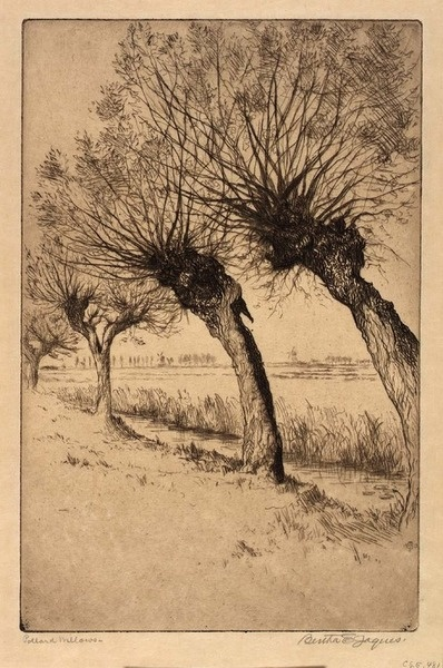 Pollard Willows (knotwilgen), Rijsord, Holland  n.d. Bertha E. Jaques Born: Covington, Ohio 1863  Died: Chicago, Illinois 1941  etching Smithsonian American Art Museum Gift of Chicago Society of Etchers