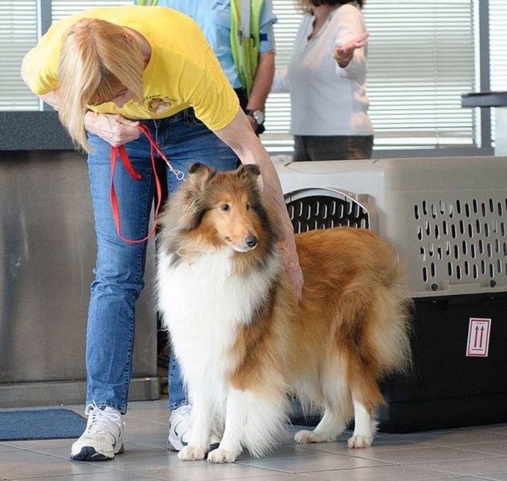 Reveille's first day in Texas in 2015!