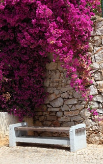 Bench with pink bougainvillea in Lagos, Algarve Portugal