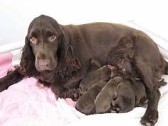 ... group dog fields d...
