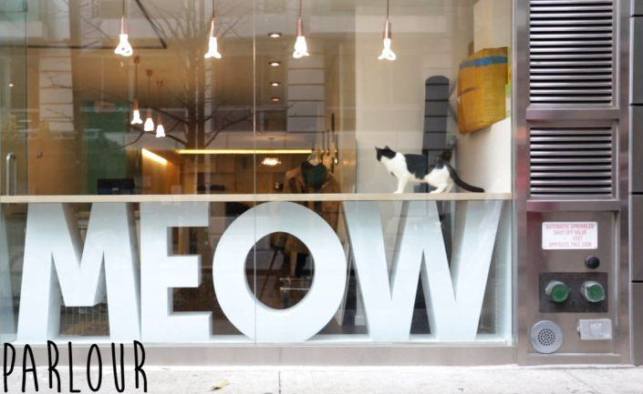 New York Cat Cafe - doesn't look quite as appealing for cats as the kitty café in Nottingham, England that really is amazing!