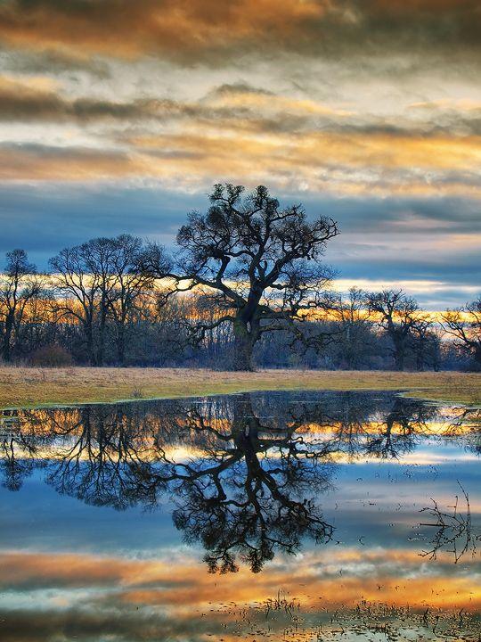 reflets dans l eau