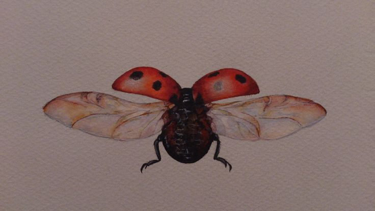 ladybud flying