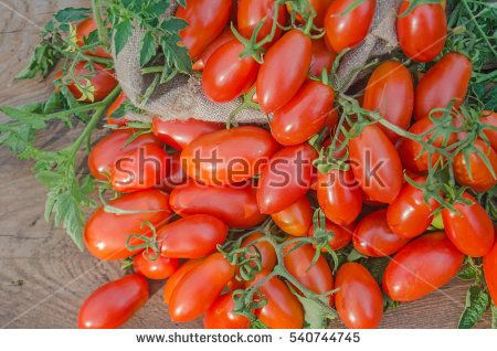 Fresh long tomato on a wooden table.  Fruits have a deep red color. A productive plum tomato