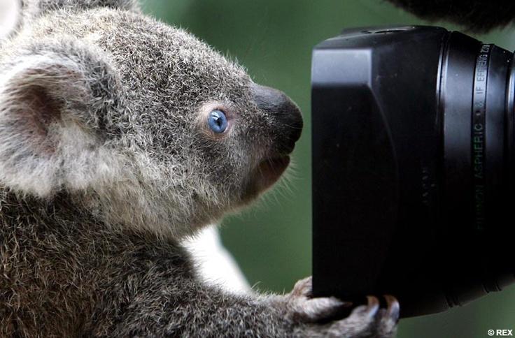 Harvey Wildlife Photography