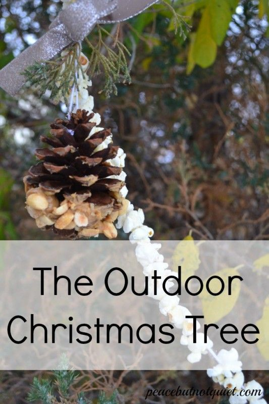 The Outdoor Christmas Tree -- we decorated a tree outdoors with bird-friendly treats...to get them in the holiday season!