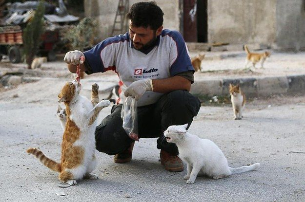 This Remarkable Man Feeds The Homeless Cats Of War-Torn Syria  While most humans have abandoned Masaken Hanano due to constant shelling, one person returns daily to feed more than 150 homeless cats. http://www.buzzfeed.com/mbvd/this-remarkable-man-feeds-the-homeless-cats-of-war-torn-syri#hxt5yz