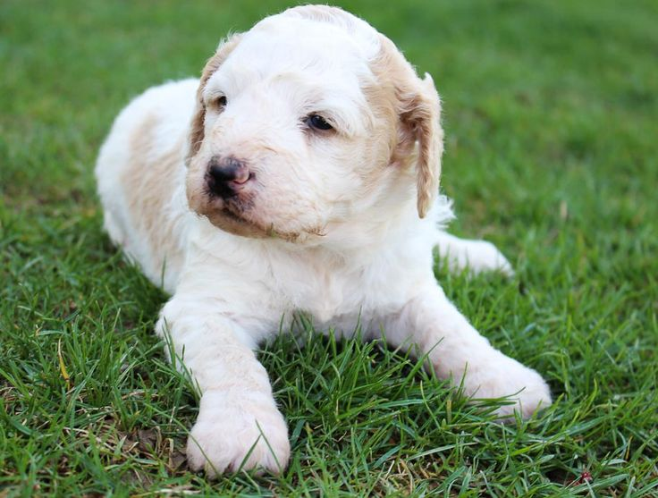 Puppies for rescue in indiana