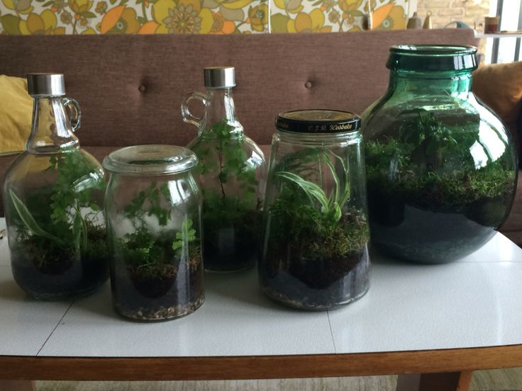 Wanted to make a terrarium. Turned out into making 5. I guess you could say I love it.