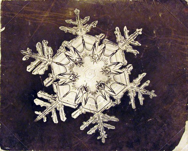 Snowflake by Wilson A. Bentley, the first person to capture the image of a single snowflake with a camera via telegraph.co.uk #Snowflake #Wilson_A_Bentley #telegraph