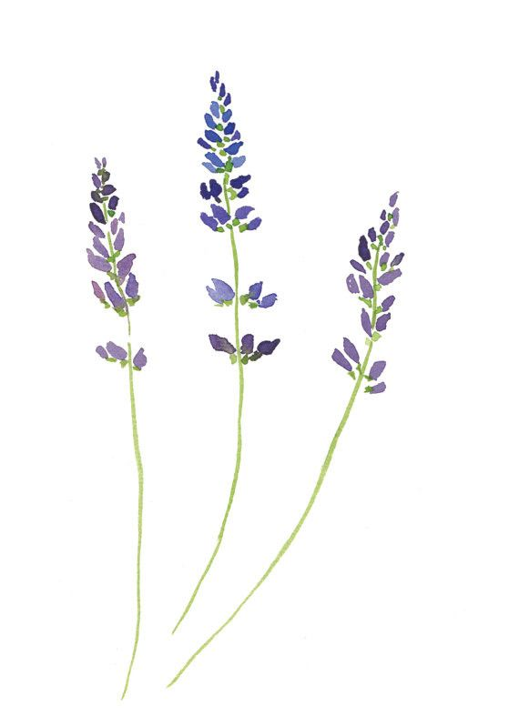 "A watercolor of the flowering plant and herb lavender, painted in a simplistic and clean style. This is a 5"" x 7"" digital print of the original painting. Ships in envelope with the print sealed in a c"