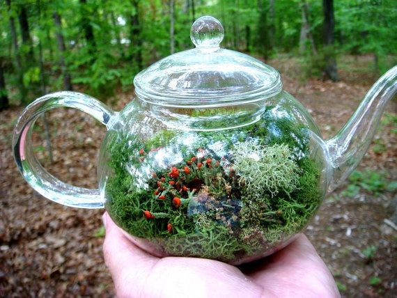 TEA Pot Terrarium, Glass, Lichen and Moss Terrarium. Great for HOME or OFFICE. Nice Unusual Gift. Terrariums by mossterrariums on Etsy.: Ideas, Craft, Teapots, Terrariums, Tea Pots, Garden, Teapot Terrarium
