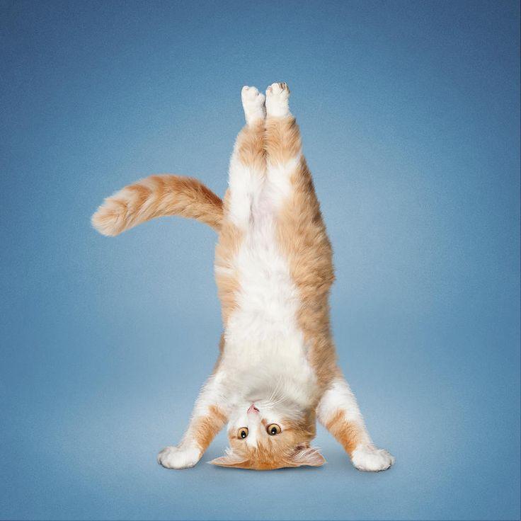Рыжая веселая гимнастика — img 6