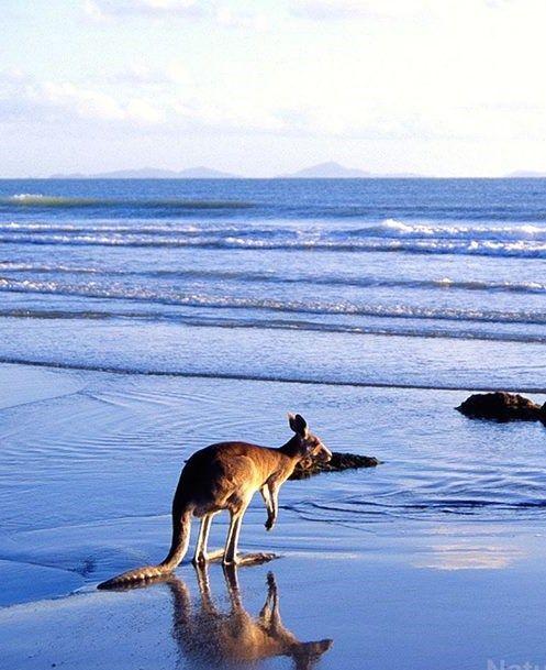 Cape Hillsborough, near Mackay Queensland Australia