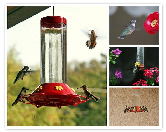 The 25 best hummingbird mixture ideas on pinterest hummingbird i love watching the hummingbirds at my feeders had to and a second feeder this homemade hummingbird forumfinder Gallery