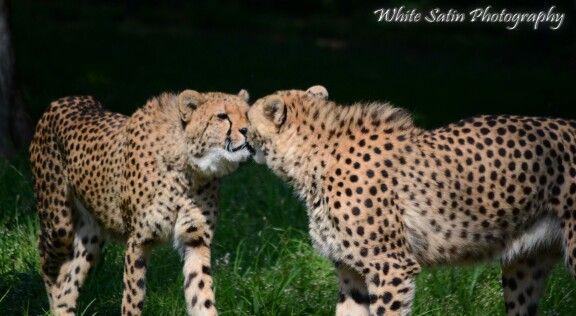Johannesburg Zoo. Animal photography