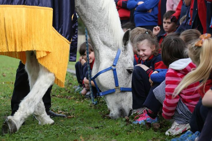 Horsham welcomes former champion racehorse Subzero for visit ...